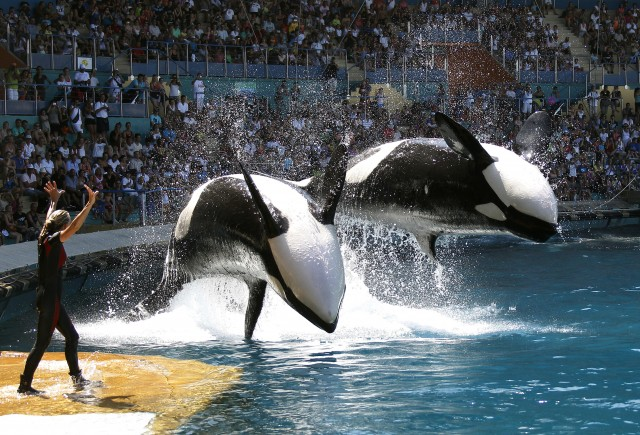 how much does a seaworld whale trainer make
