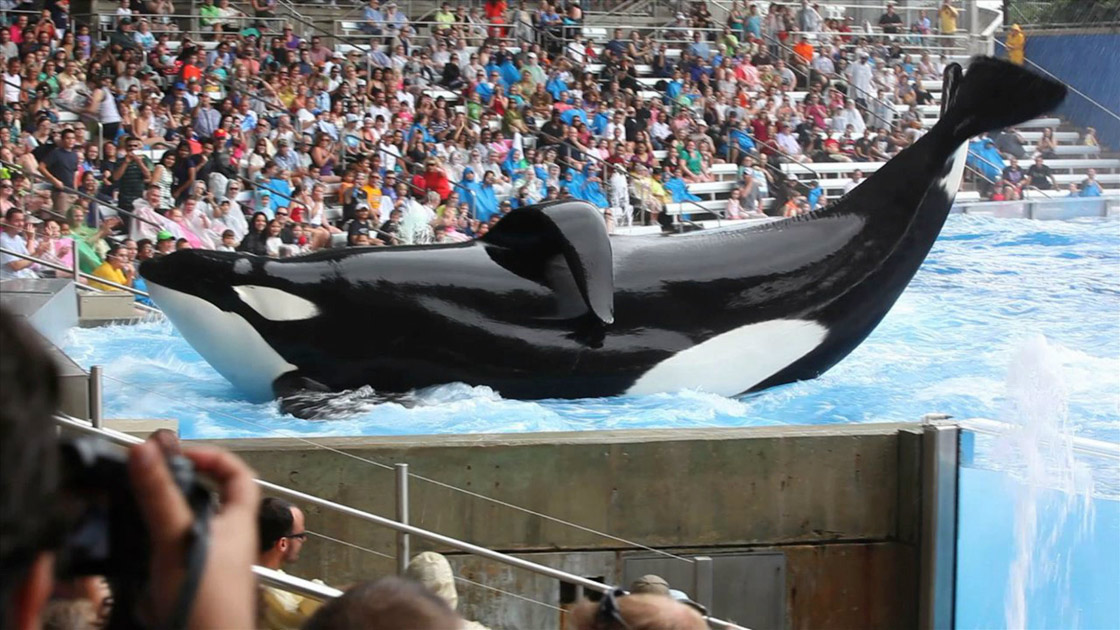 Review: 'Blackfish' Ensures You'll Never Go to SeaWorld Again