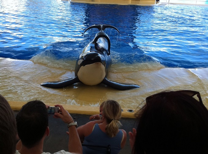 a comprehensive analysis of blackfish a documentary film by gabriela cowperthwaite Awesome ocean - blackfish is a documentary if the of gabriela cowperthwaite's blackfish of the film, it is reported that cowperthwaite phoned.