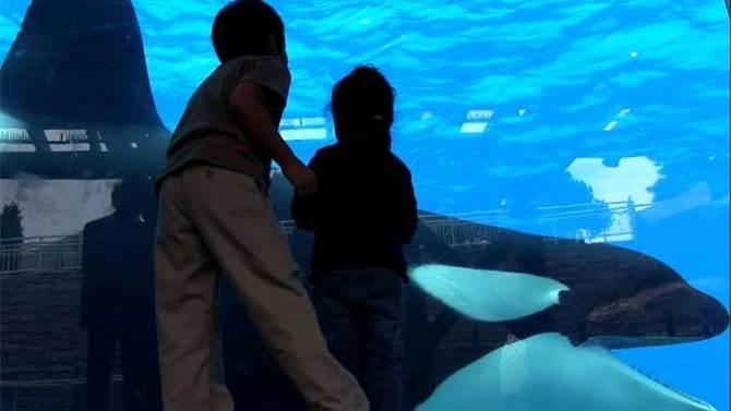 Blackfish' Director Gabriela Cowperthwaite on SeaWorld's