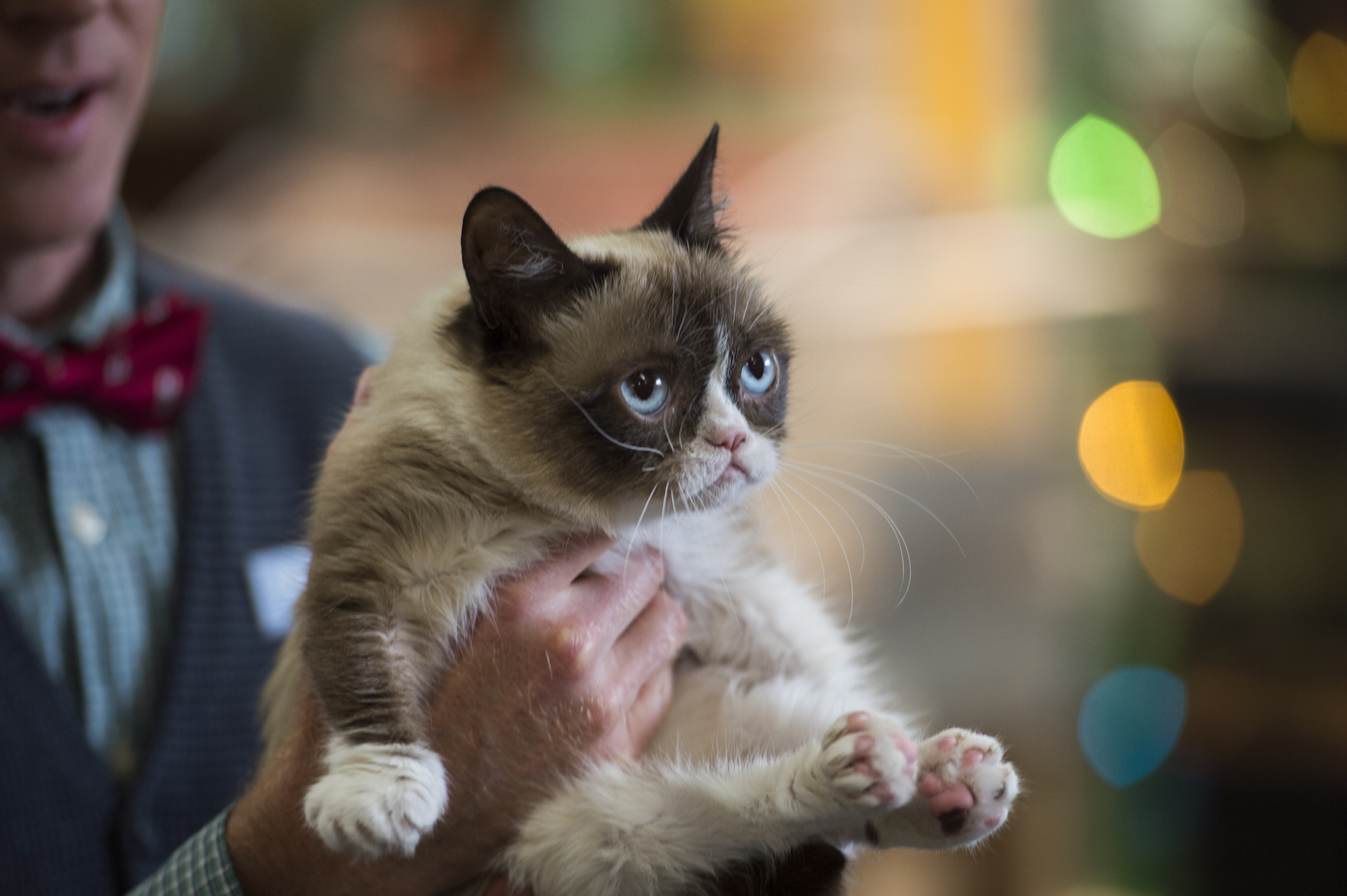 Should you watch 'grumpy cat's worst christmas ever'? A handy.