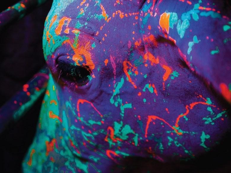 """""""Neon Bull"""""""
