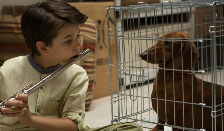 Todd Solondz's Wiener-Dog