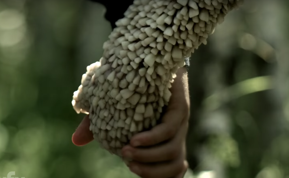 Channel Zero Trailer Syfy S Series Has A Seriously Creepy Tooth Fairy Indiewire