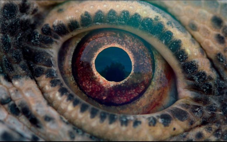 573276553be 'Voyage of Time' Review: Terrence Malick's 90-Minute Documentary Is Not a  Trip Worth Taking