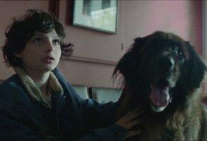 Finn Wolfhard Pup