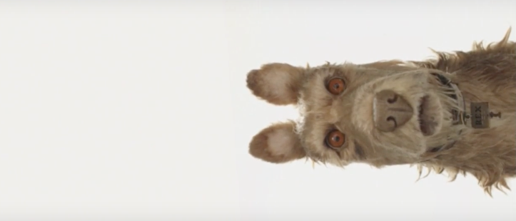 Can Dogs Watch Stop Motion