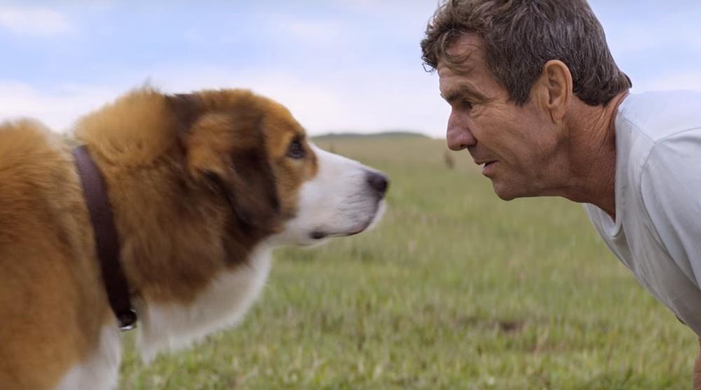 A Dog's Purpose (2017), film online subtitrate în Română.