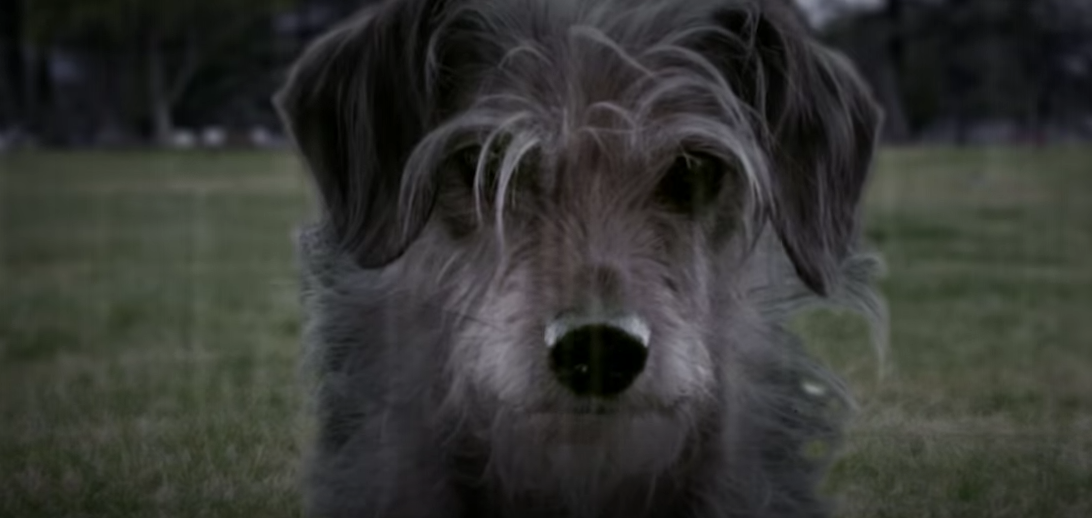 'Dog Wick': John Wick Parody Sees Keanu Reeves' Pup Seeking Revenge – Watch