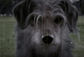 Dog Wick