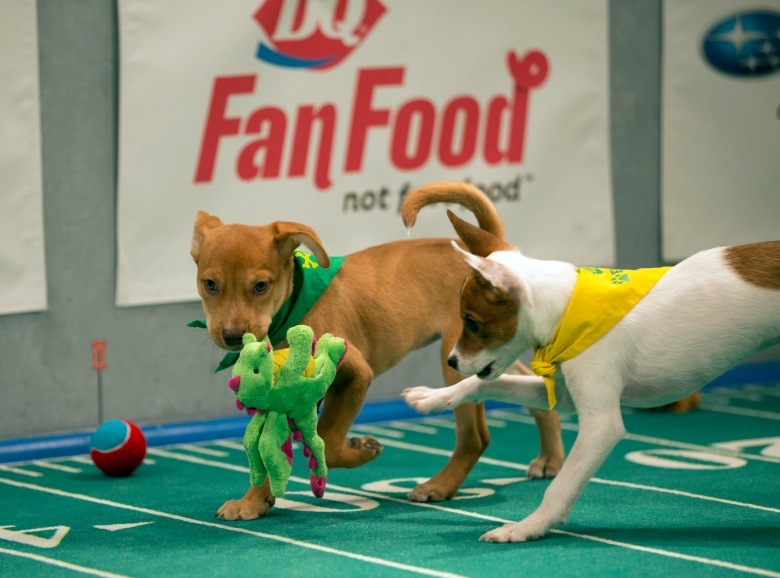 "Duke and Dawson, ""Puppy Bowl XIII"""