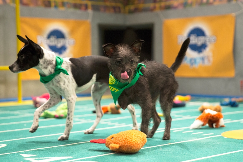 "Ricky (left) and tripod Lucky (right) on the field for ""Puppy Bowl XIII"""