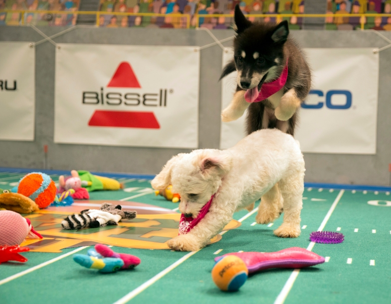 "Nikita and Alexander Hamilpup, ""Puppy Bowl XIII"""