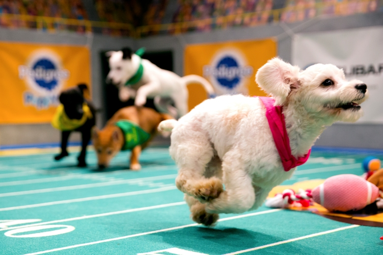 "Nikita, ""Puppy Bowl XIII"""