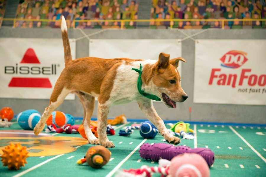 Puppy Bowl XIII