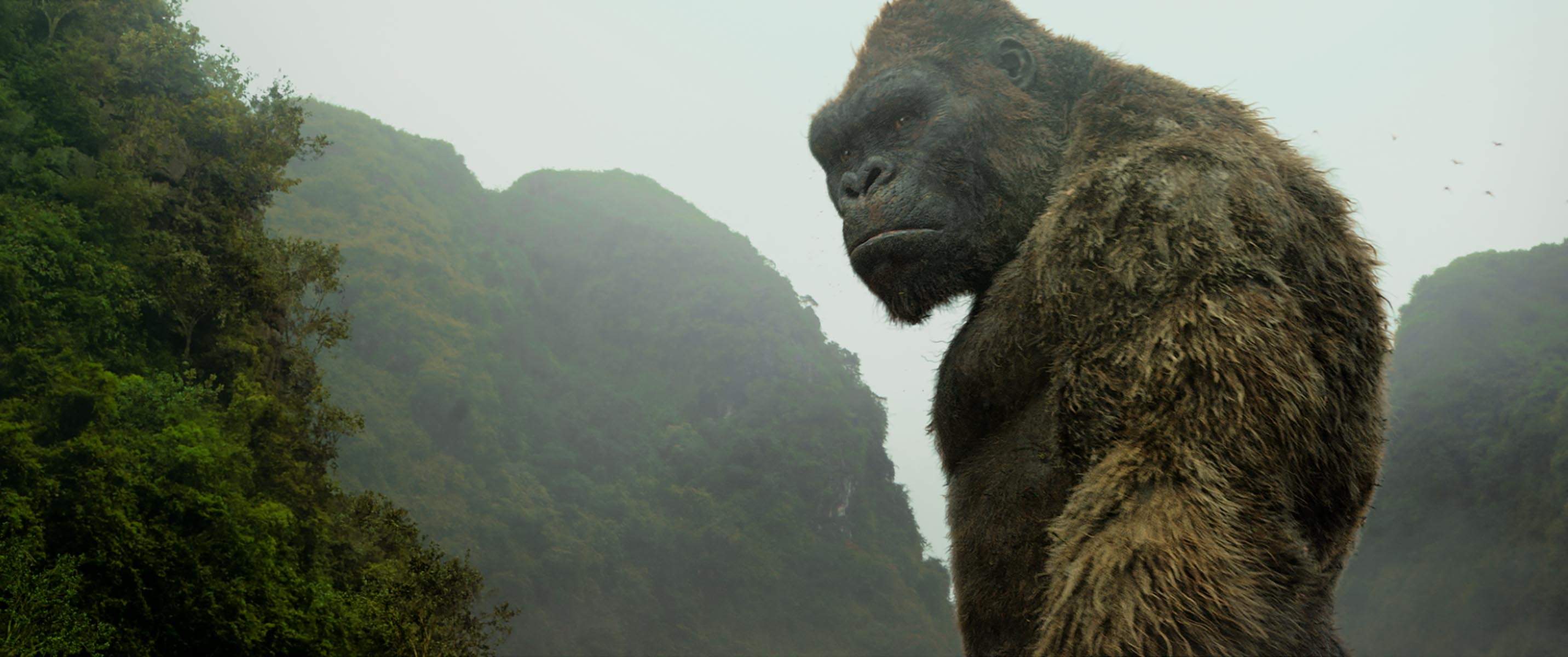 Kong skull island soundtrack on cd - Kong Skull Island Soundtrack Is Now On Spotify And Is Fit For A King Indiewire