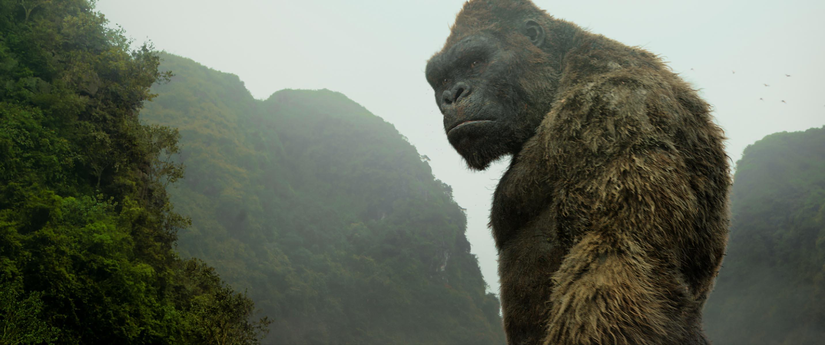 WarnerMedia Turned Down $200 Million Netflix Offer for 'Godzilla vs. Kong,' Eyes HBO Max — Report - IndieWire