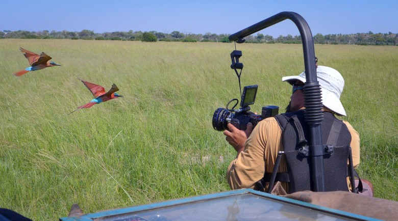 Cameraman Brad Bestelink films carmine bee-eaters while strapped into a safety harness on the front of a 4-wheel drive in Botswana.  Bee-eaters follow the crew's vehicle through the long grass as the wheels flush their insect prey into the air. It provides a perfect opportunity to capture intimate close-up slow-motion footage of wild birds hunting on the wing.