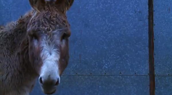Do Donkeys Act?