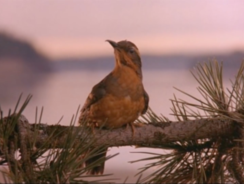 Why Bird Brain Shouldnt Be Considered >> Twin Peaks Why It Shouldn T Have Changed Its Opening Titles