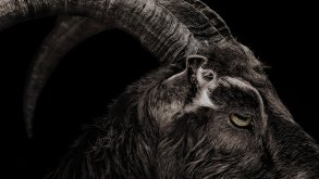 Black Phillip The Witch