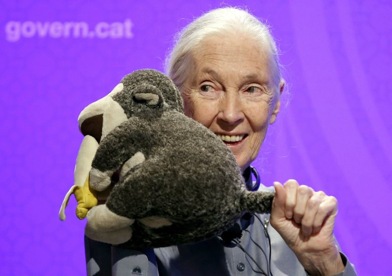 British Primatologist and Anthropologist Jane Goodall Poses For the Media with a Monkey Toy During a Press Conference Held in Barcelona Northeastern Spain 27 July 2015 Goodall Will Receive Later Today the 27th International Catalonia Award Which Recognises the Contribution of Outstanding People to the Development of Humankind Through Their Careers Spain BarcelonaSpain Jane Goodall - Jul 2015