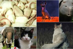 Best movie animals