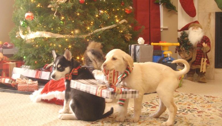 Puppies Crash Christmas Hulu S New Yule Log Alternative