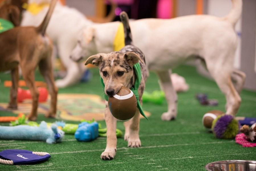 Ana, Puppy Bowl XIV