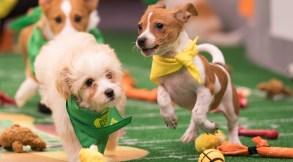 JPaw and Lila, Puppy Bowl XIV