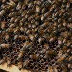 Rotten Netflix Bees