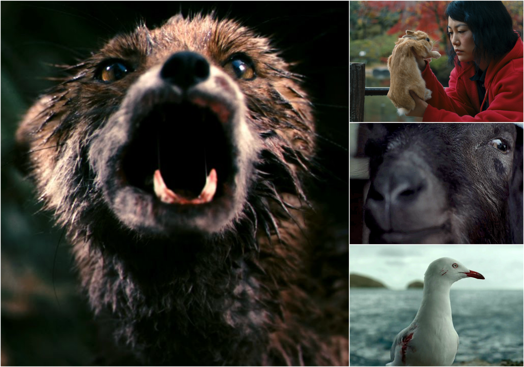 The Best Animal Movie Characters Of The 21st Century Indiewire