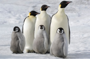 march of the penguins 2 next step