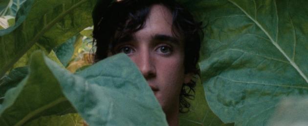 Happy As Lazzaro: Alice Rohrwacher's Film,