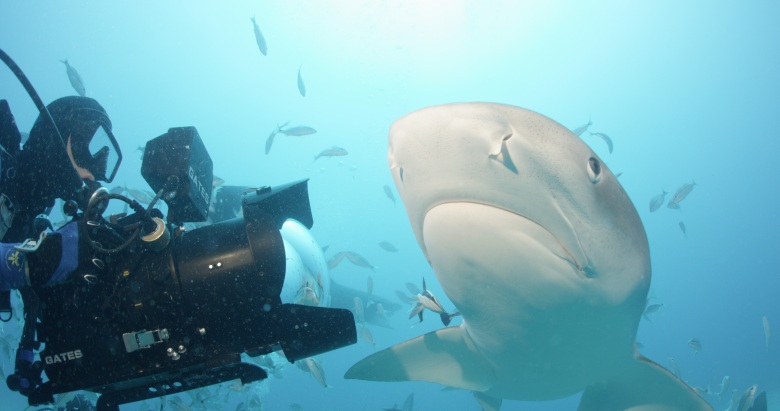 """Sharkwater Extinction"""