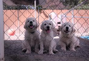 Dogs Netflix Trailer