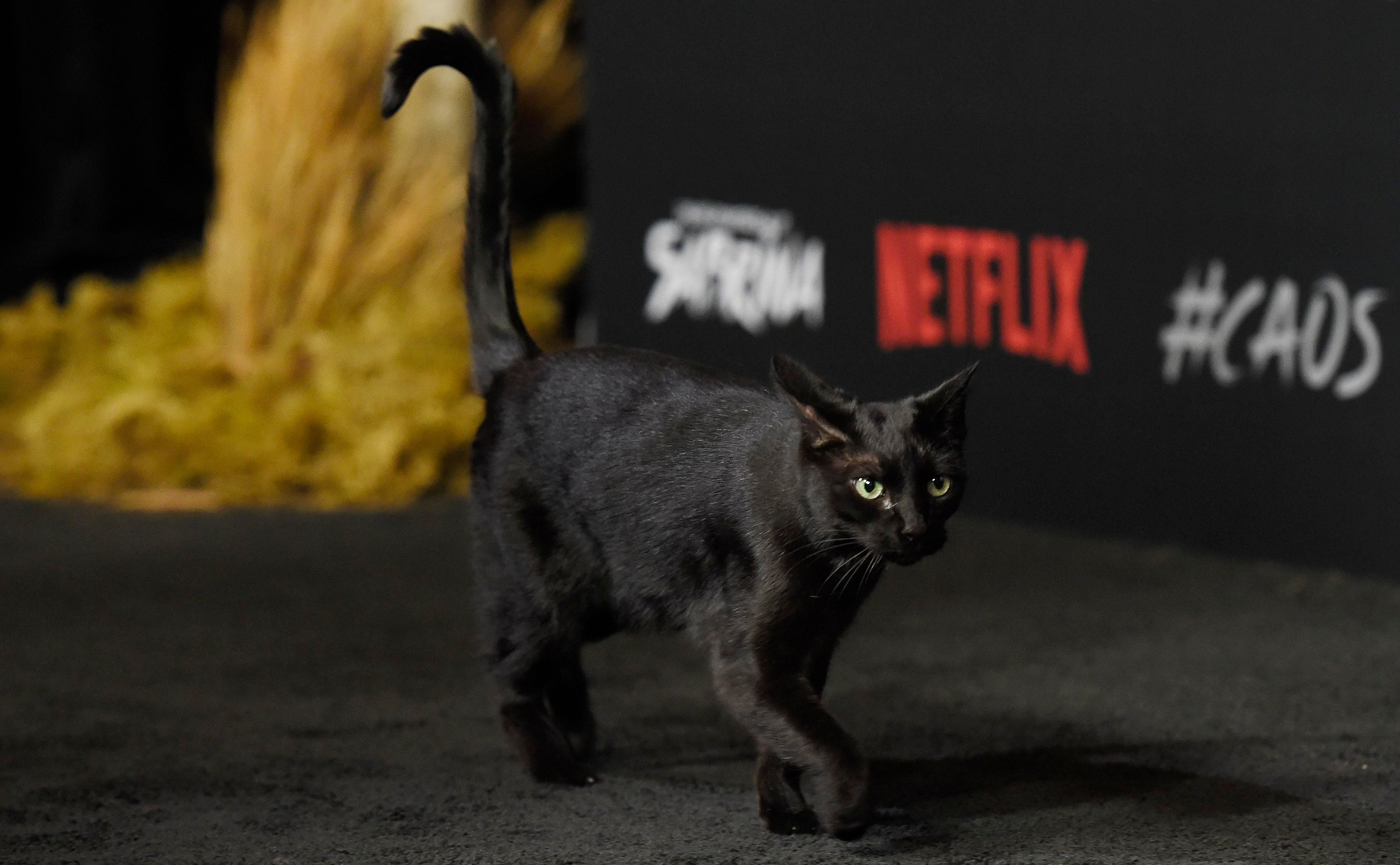"A black cat prowls the carpet at the premiere of the occult-themed Netflix series ""Chilling Adventures of Sabrina,"", in Los AngelesLA Premiere of ""Chilling Adventures of Sabrina"", Los Angeles, USA - 19 Oct 2018"