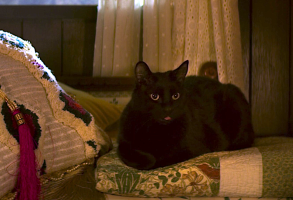 "Salem Saberhagen, ""Chilling Adventures of Sabrina"""