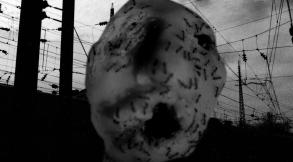 """""""Ant Head"""""""