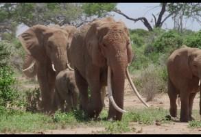 """The Elephant Queen"""
