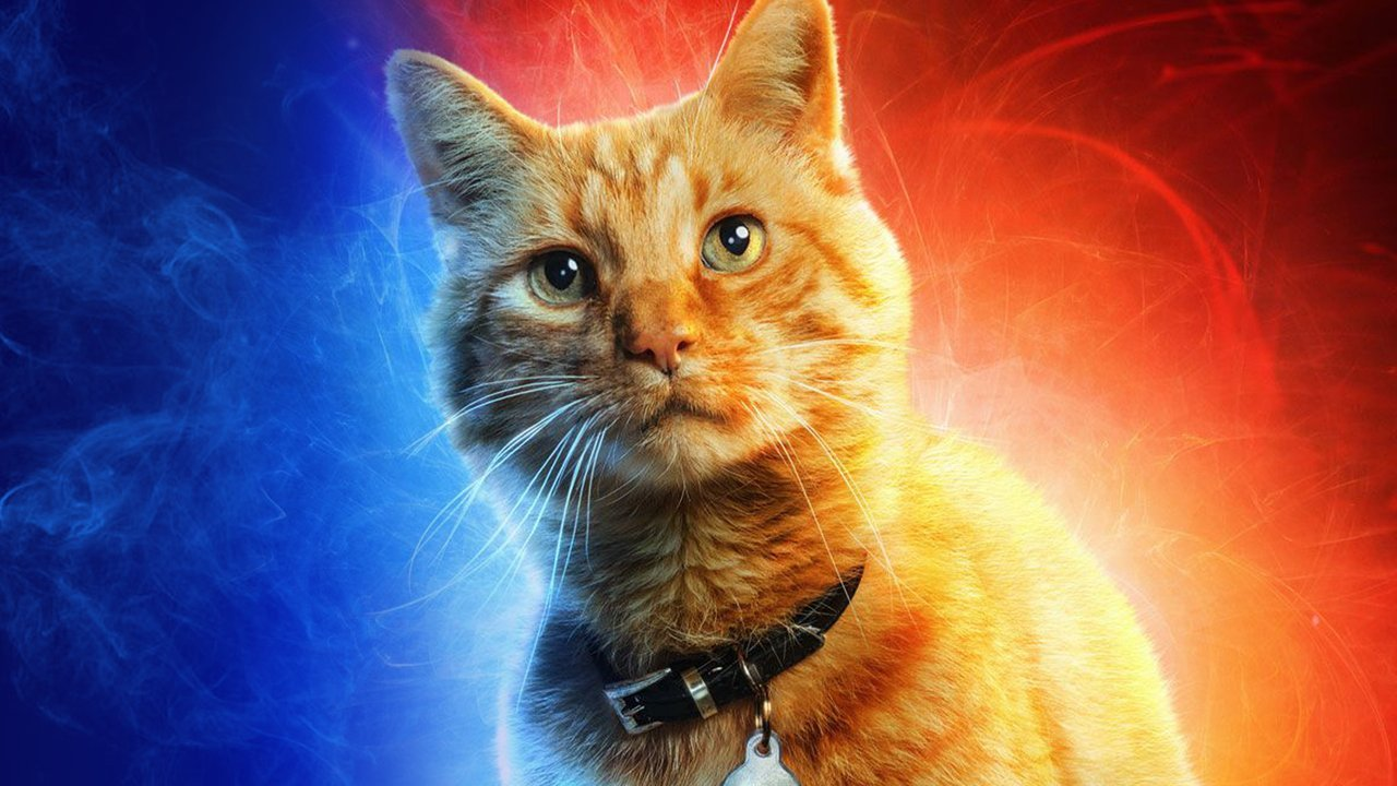 The 12 Best Movie Cats Of All Time Indiewire Critics Survey