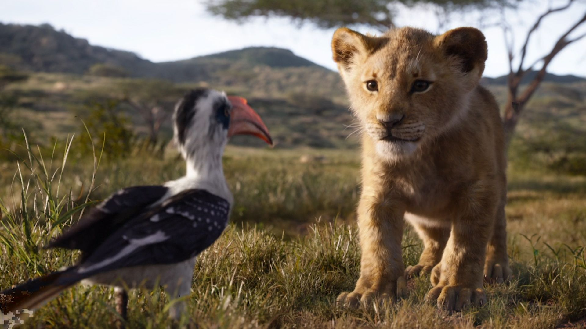 u2018the lion king u2019 is not a shot