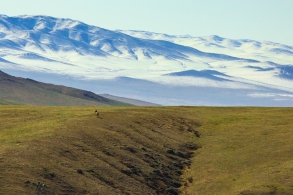 A wild Takhi, or wild horse, looks out across its endless steppe habitat in Hustai National Park, Mongolia