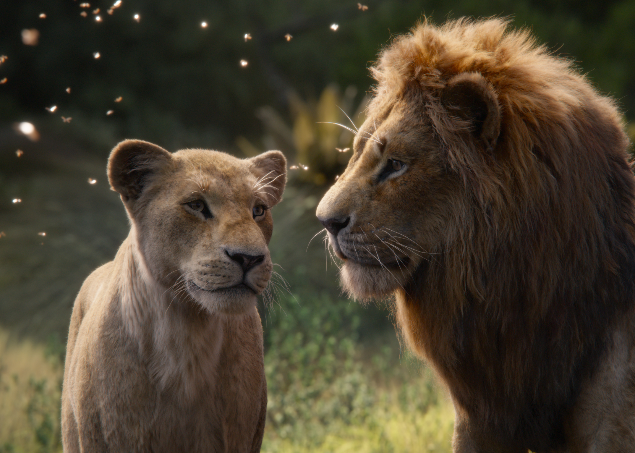 """THE LION KING - Featuring the voices of Beyoncé Knowles-Carter as Nala and Donald Glover as Simba, Disney's """"The Lion King"""" is directed by Jon Favreau. In theaters July 19, 2019. © 2019 Disney Enterprises, Inc. All Rights Reserved."""