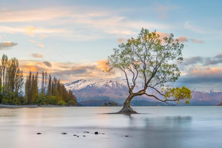 Sunrise, single tree standing in water, Lake Wanaka, The Wanaka Tree, Roys Bay, Otago, Southland, New ZealandVARIOUS