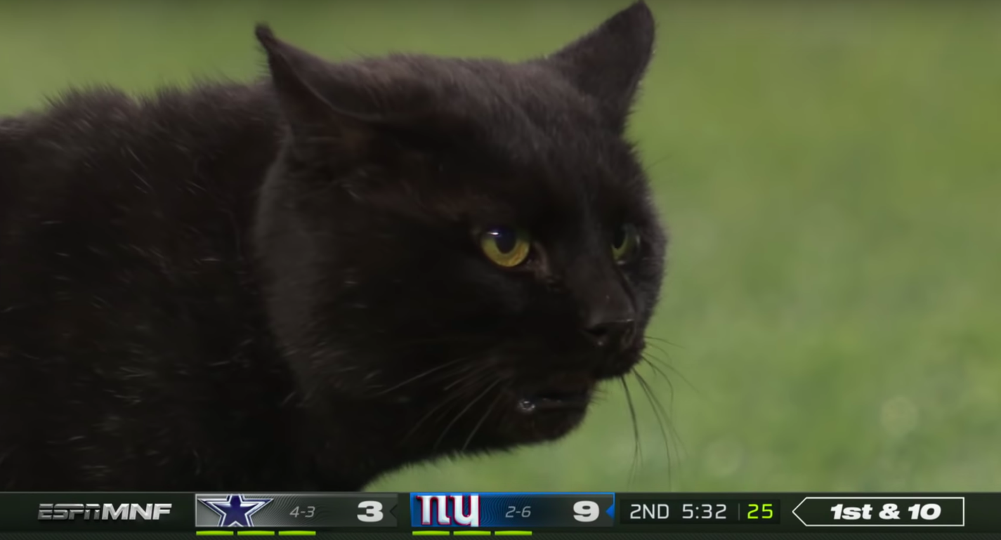 Monday Night Football Cat Is How We Watch Sports On Tv And Online Now Indiewire