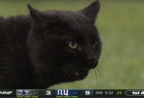 Monday Night Football Cat