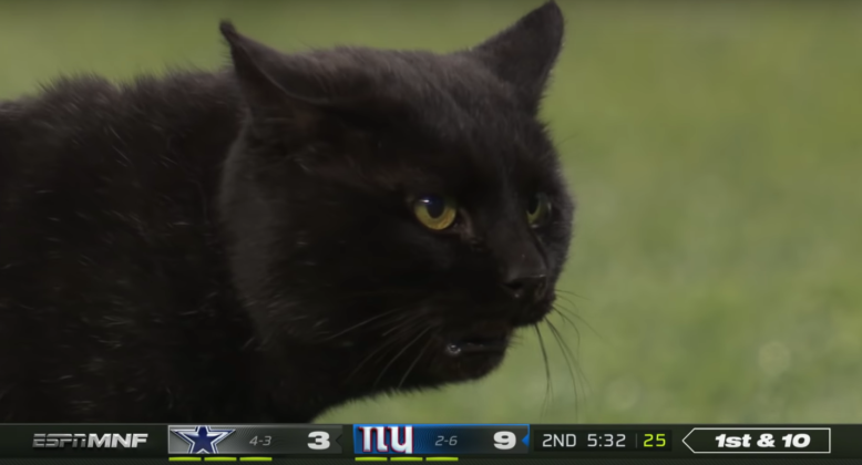 Image result for cat on monday night football