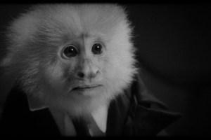 Watch David Lynch Interrogate a Monkey in His New Netflix Short Film