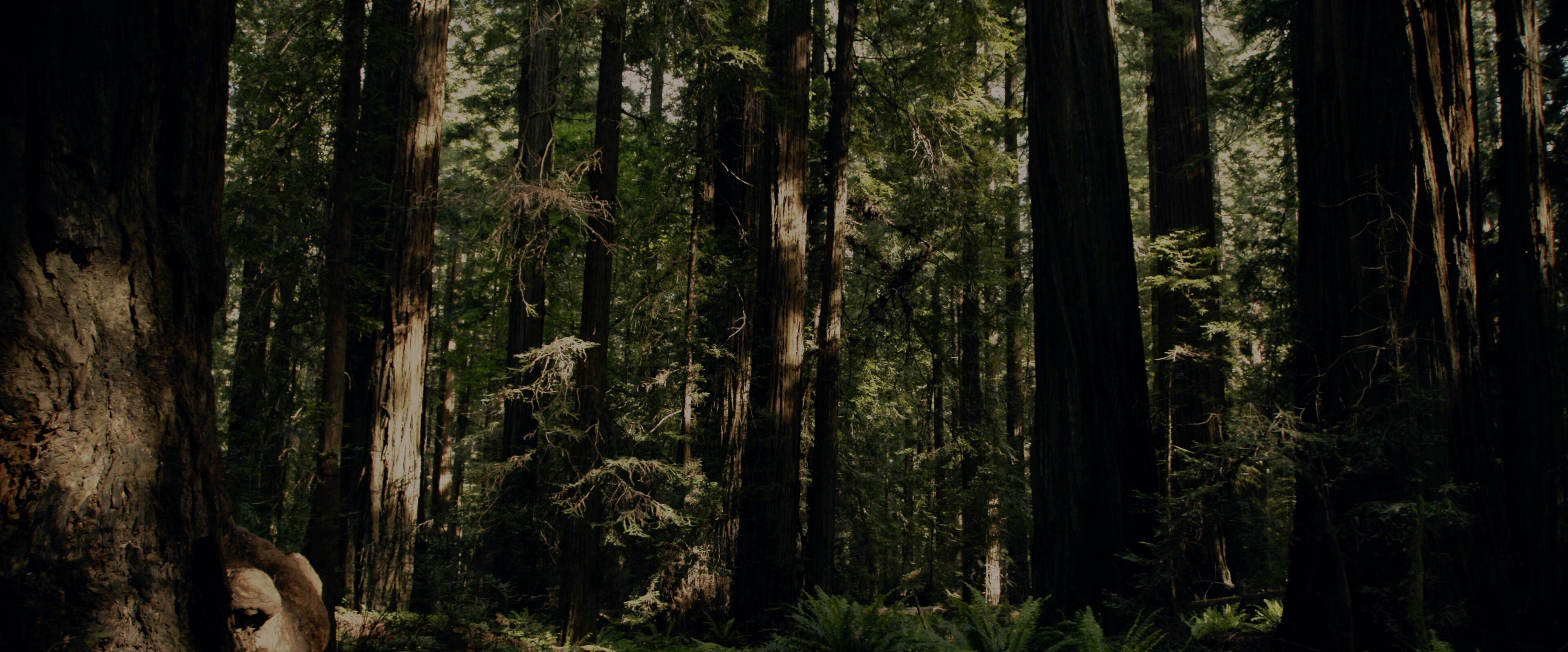 Sasquatch Ñ While visiting a pot farm in Northern California in 1993, investigative journalist David Holthouse heard a story that still haunts him: On a nearby farm three men were torn limb from limb in a savage Bigfoot attack. SASQUATCH follows David as he revisits the Redwoods 25 years later, in search of any evidence that might lead to the truth of what happened that night. As he pulls at the threads of this story heÕll be taken down a path thatÕs far more terrifying than anyone would have imagined. (Photo by: Hulu)